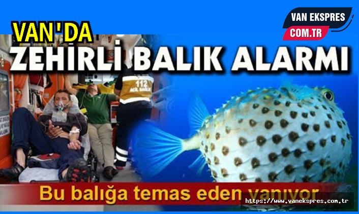 Van'da balıkçılarda zehirli balık alarmı