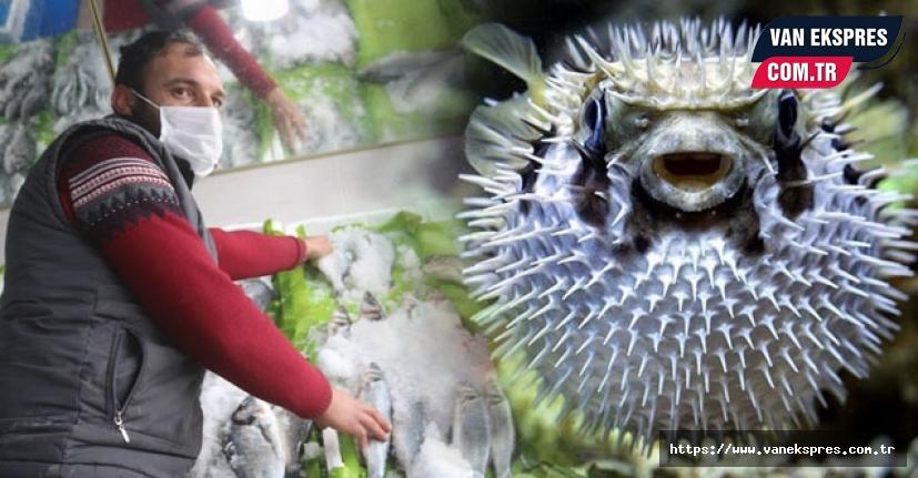 Van Valiliği talimat: Balon Balığı aranıyor
