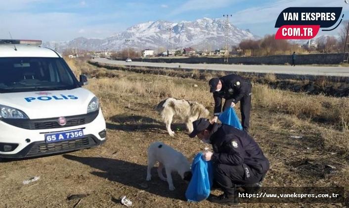 Van'da polis, sokak hayvanlarına yiyecek bıraktı
