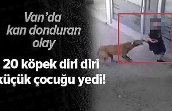 Van'da köpeklerin saldırdığı 6 yaşındaki çocuk öldü