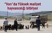Van'da hayvancılık S.O.S Veriyor