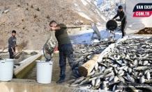 Van'da Hes Suyu Kesti 12 ton balık telef oldu