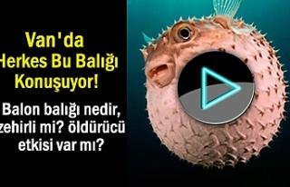 Van'da herkes bu olayı konuşuyor: Balon Balığı