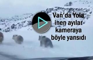 Van'da Yola inen ayılar kamerada