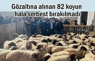 Gözaltına alınan 82 koyun hala serbest bırakılmadı
