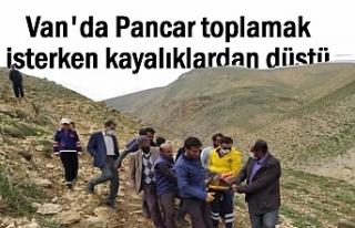 Van'da Pancar toplamaya giden bir kişi kayalıktan...