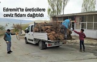Edremit'te üreticilere 3 bin ceviz fidanı dağıtıldı