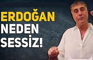 Peker'in videolarına Erdoğan neden sessiz?...