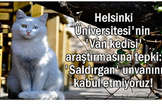 Helsinki Üniversitesi'ne Van Kedisi Tepkisi:...