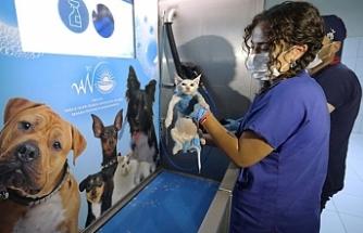 Büyükşehir Belediyesi 147 sokak hayvanını sahiplendirdi